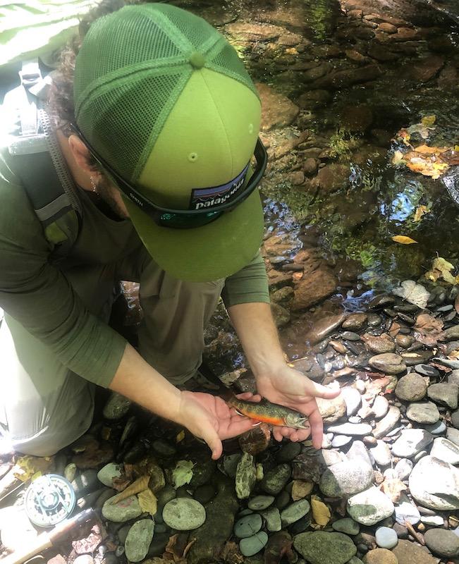 Fall Smoky Mountain Brook Trout