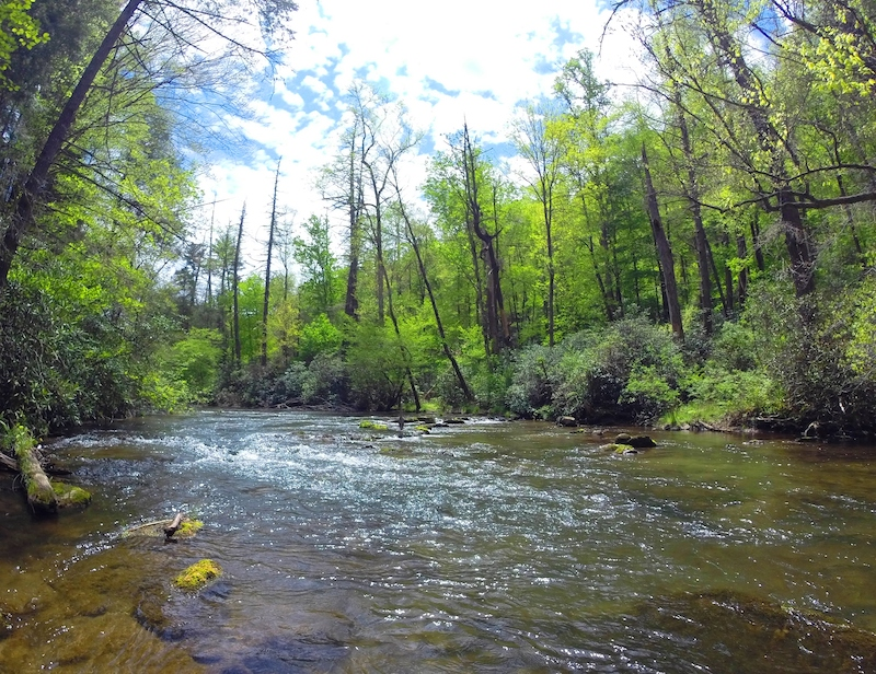 Abrams Creek Smoky Mountains